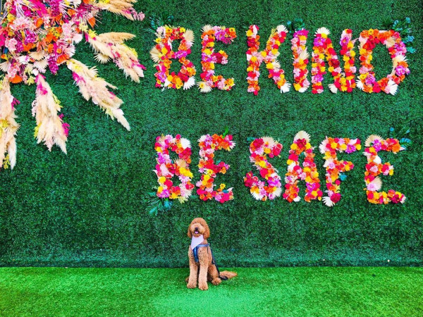 "Dog in front of ""be kind be safe"" floral wall in Plano"