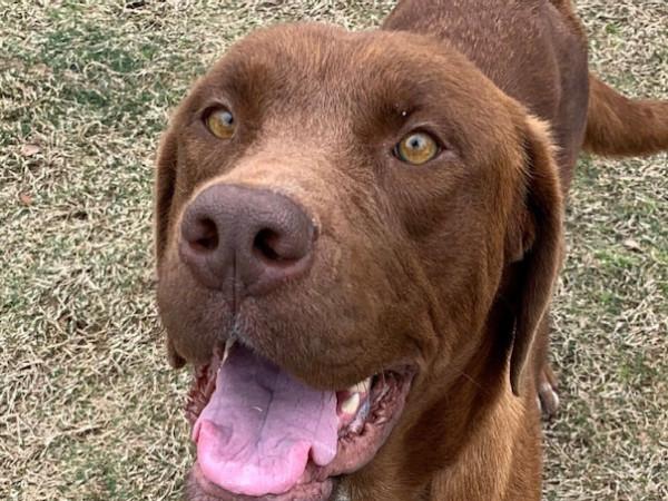 Adoptable dog Sookie