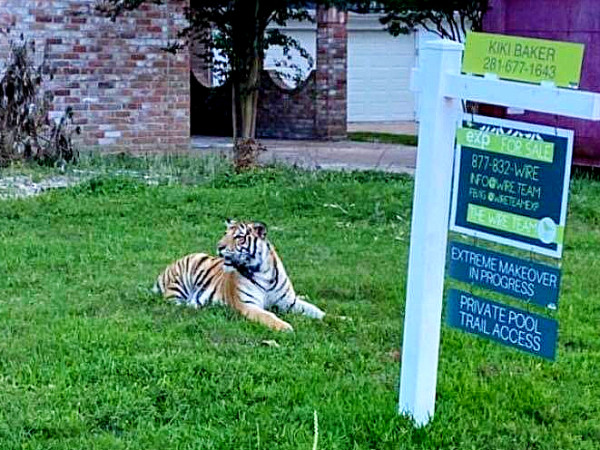 tiger houston neighborhood