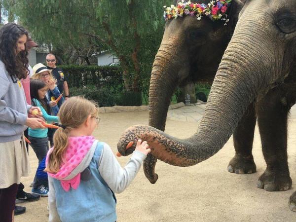 The Elephant Preserve