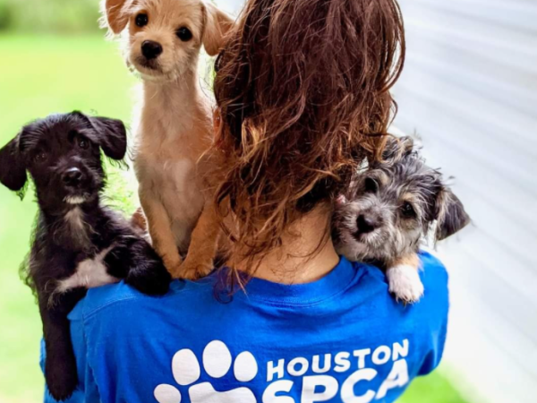 Woman with three puppies