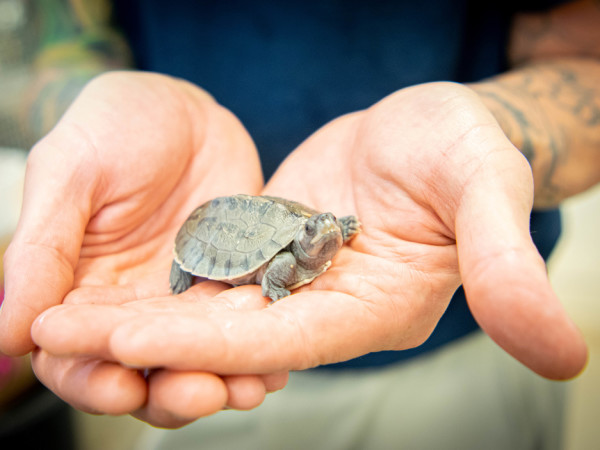 painted terrapin turtle houston zoo