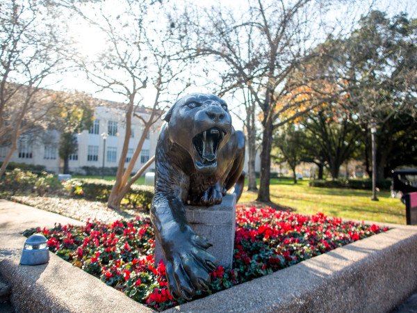 University of Houston commercial statue cougar Shasta