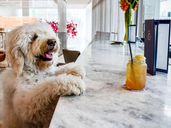 HALL Arts Hotel Howl-O-Ween, dog