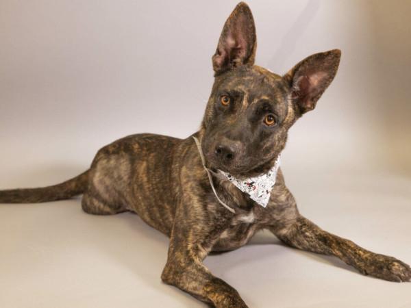 Adoptable dog Marisol