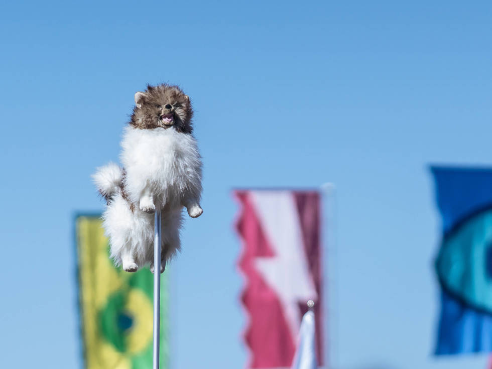 ACL Austin City Limits Music Festival 2016 flags dog