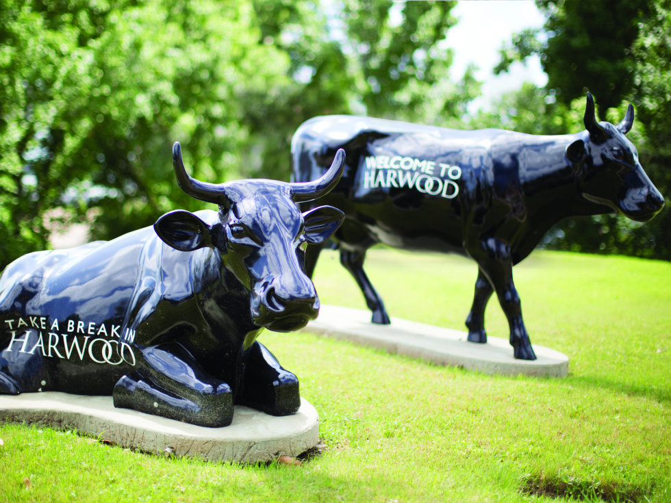 Harwood Herd