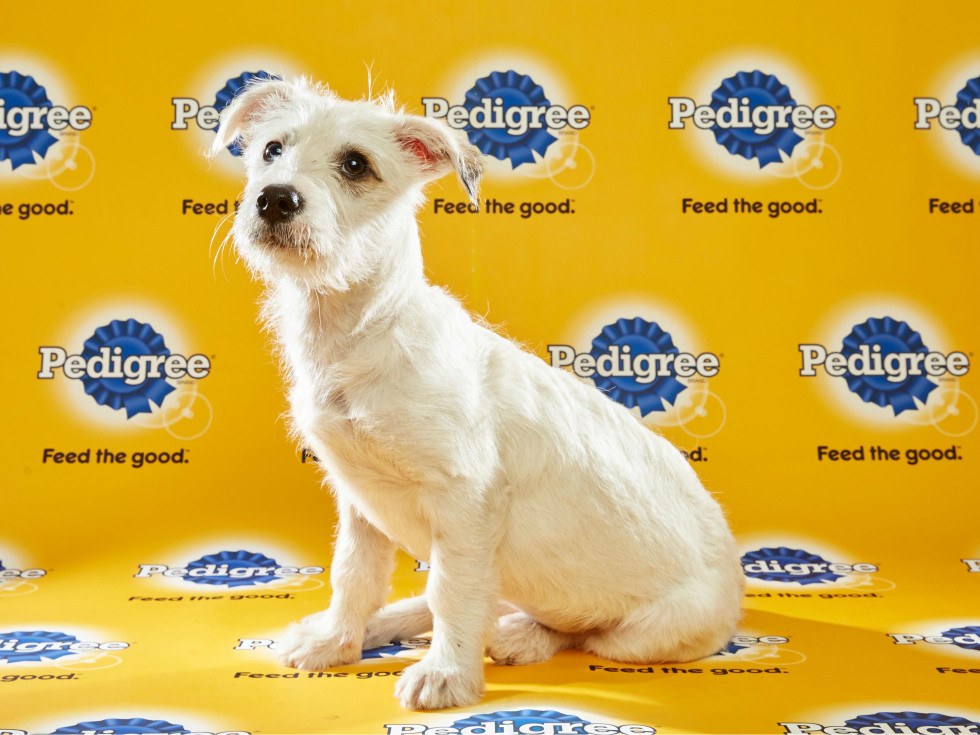 Puppy Bowl 2016 Hailey dog Leslie Noble Animal Planet