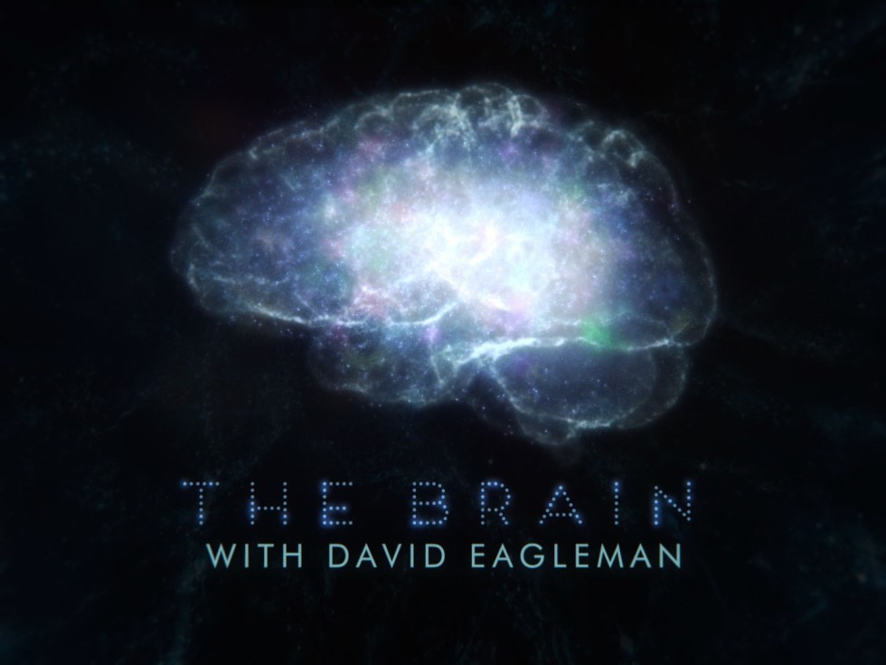 David Eagleman The Brain