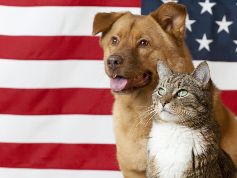 Dog and cat with American Flag