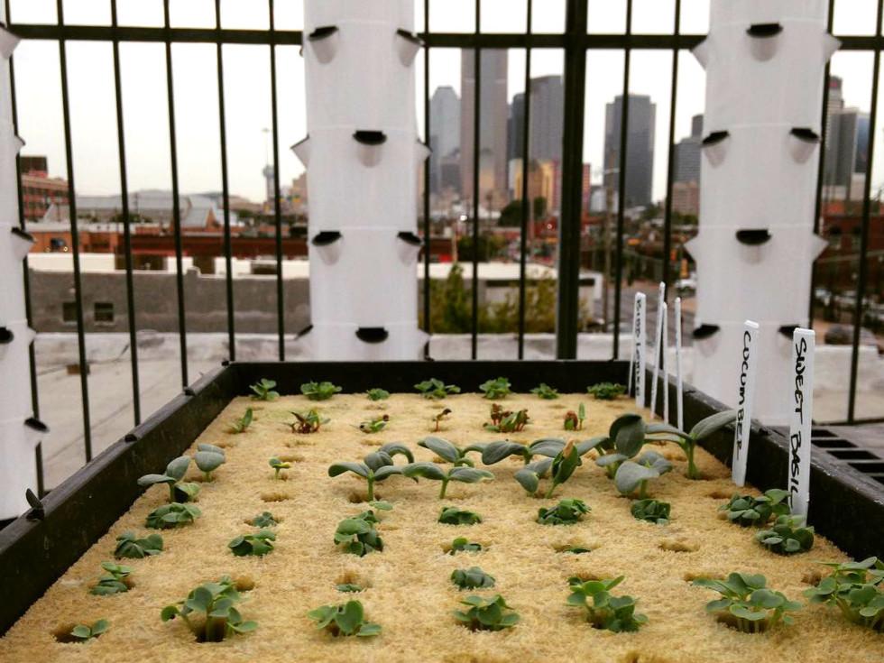 Deep Ellum Urban Farms