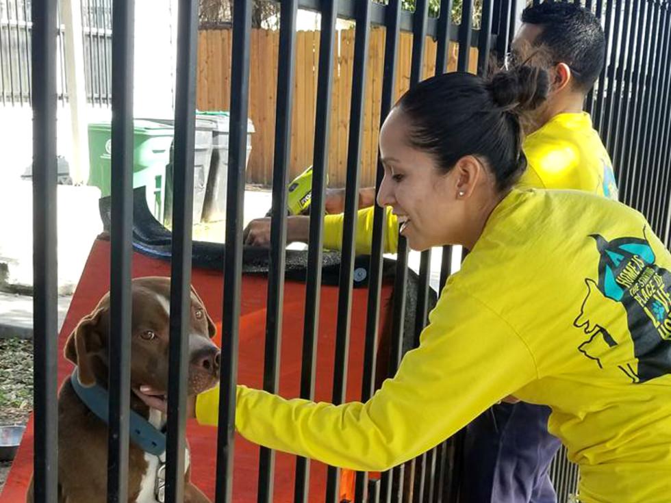 Houston Pet Set volunteer petting dog