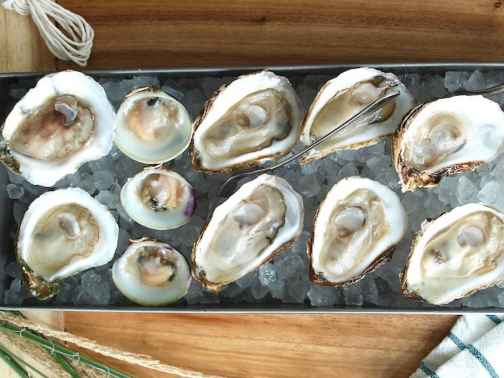 Guild ATX oysters