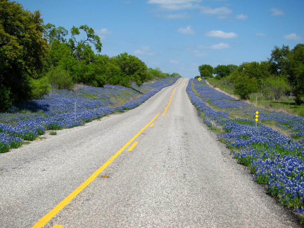News_wildflowers_bluebonnets_road_by Sassy Frassy Lassie