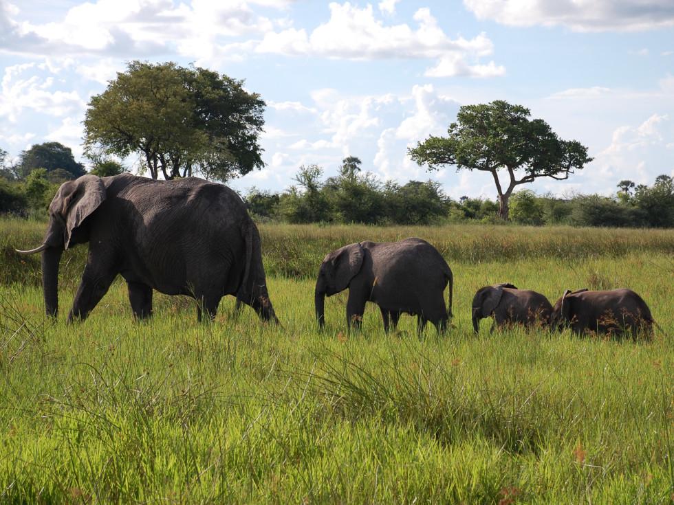 News_Lauren Levicki_Africa_elephant train