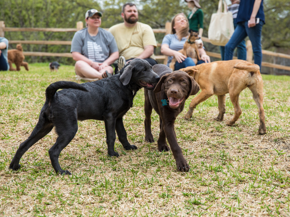 Dogs playing at a dog park