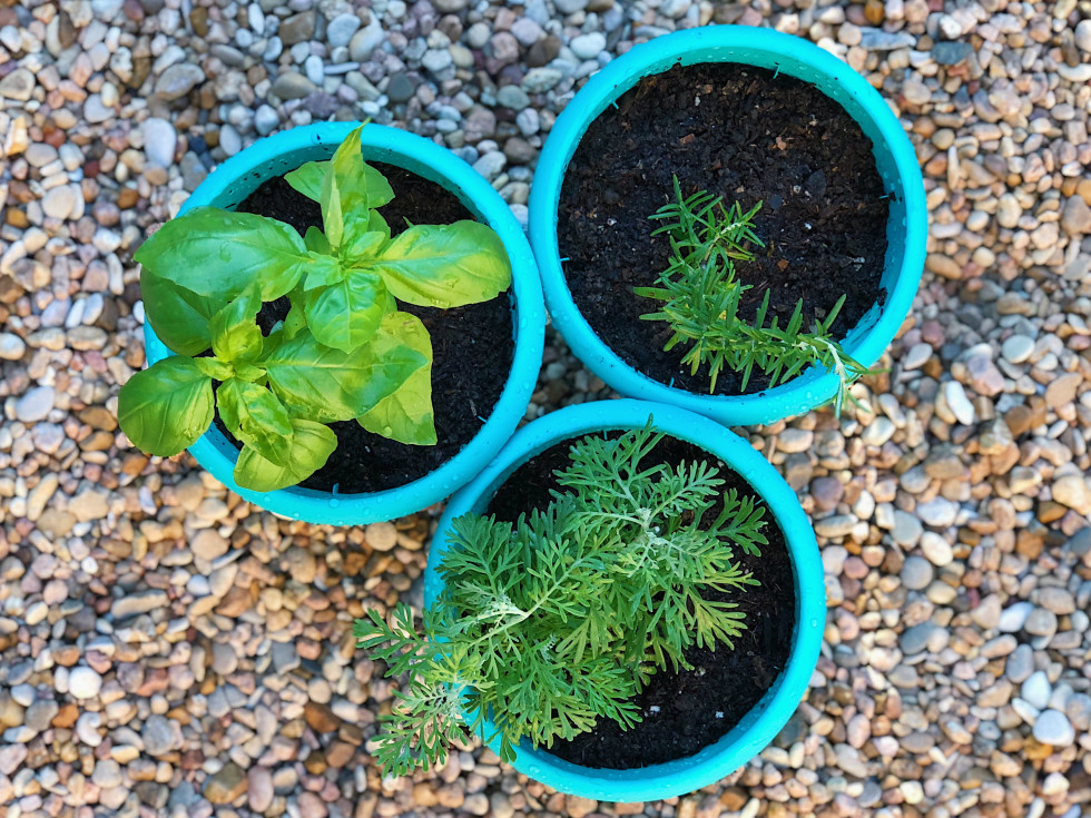 Potted plants and herbs