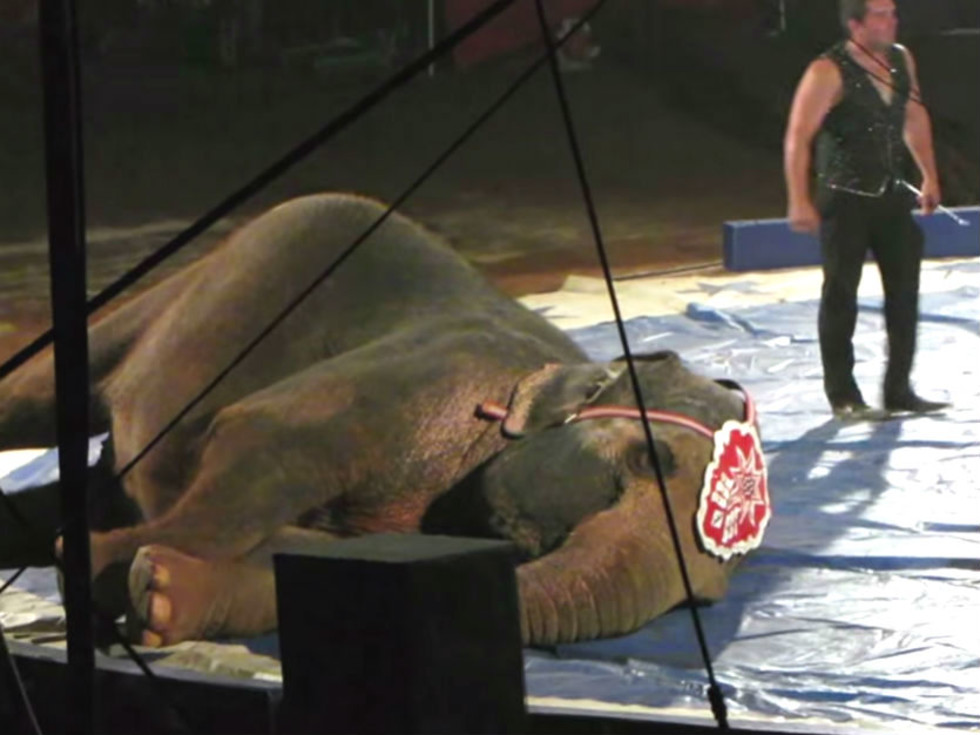 Garden Bros Circus elephant