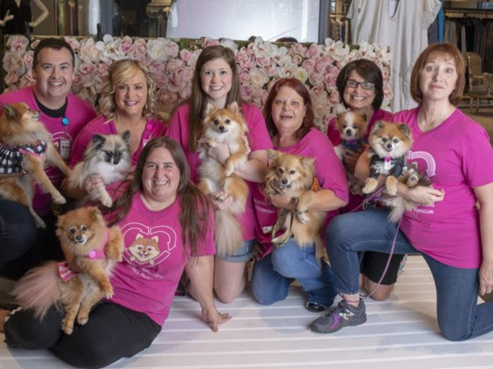 Recycled Pomeranians Rescue