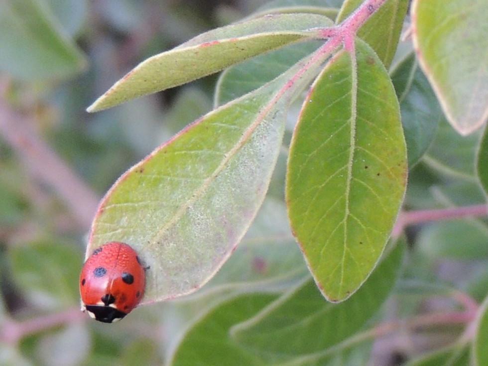 Ladybug Austin park