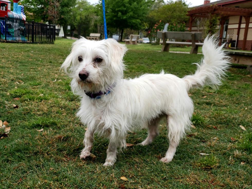 Pet of the week - Ella terrier