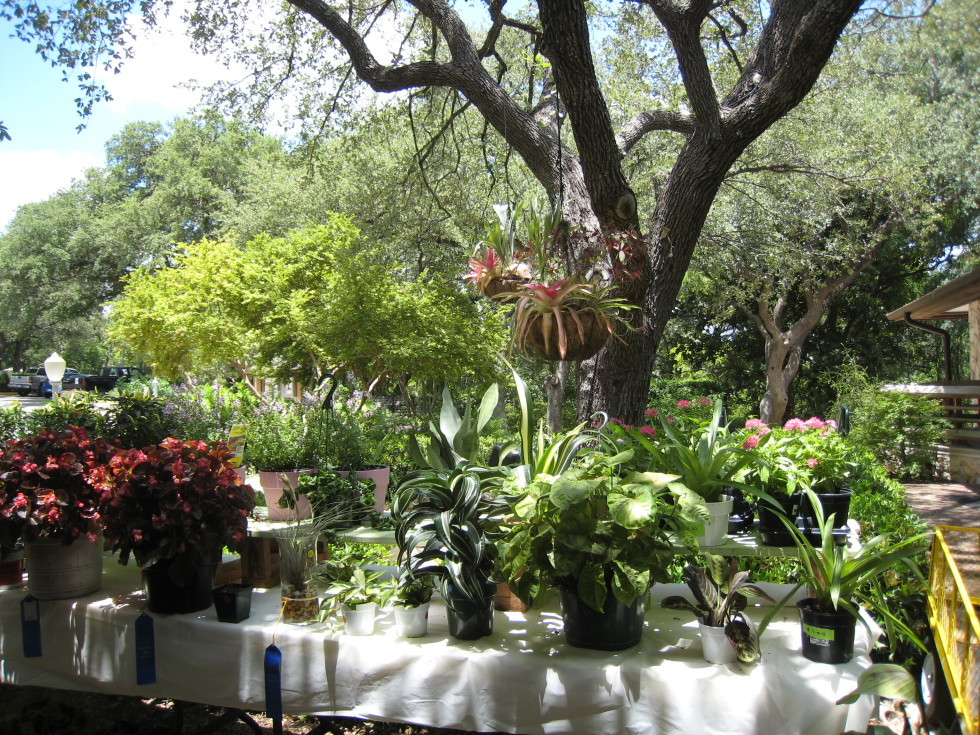 Garden Club of Austin Annual Plant Show & Sale