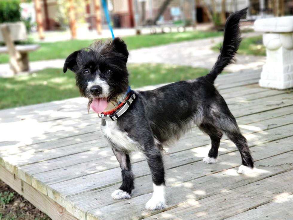 Pet of the week - Khloe terrier
