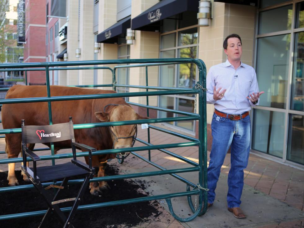 Jordan Beeman HeartBrand beef cattle