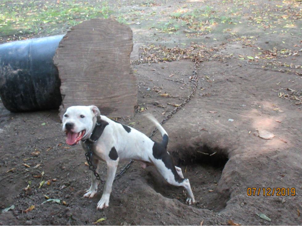 SPCA dog fighting