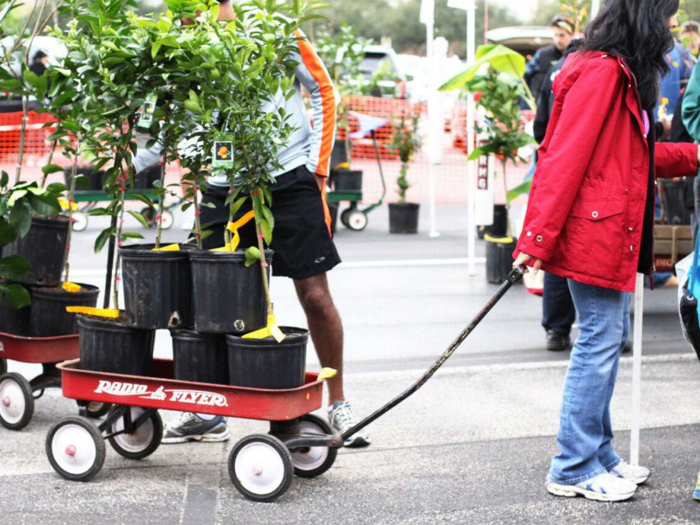 Urban Harvest presents annual Fruit Tree Sale
