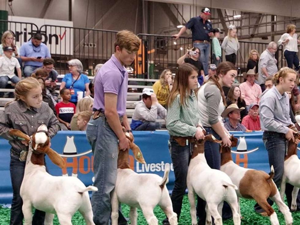 Houston Rodeo junior exhibitors