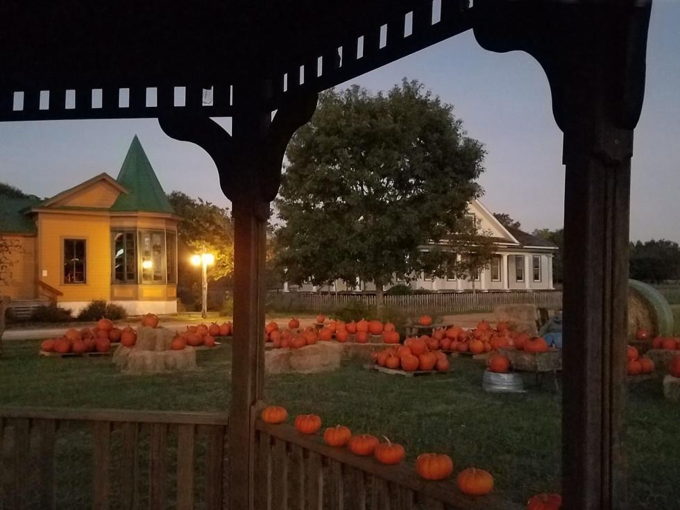 Pioneer Farms pumpkins