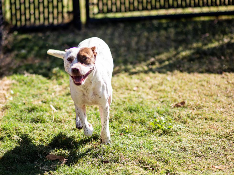 Adoptable dog Beatrice