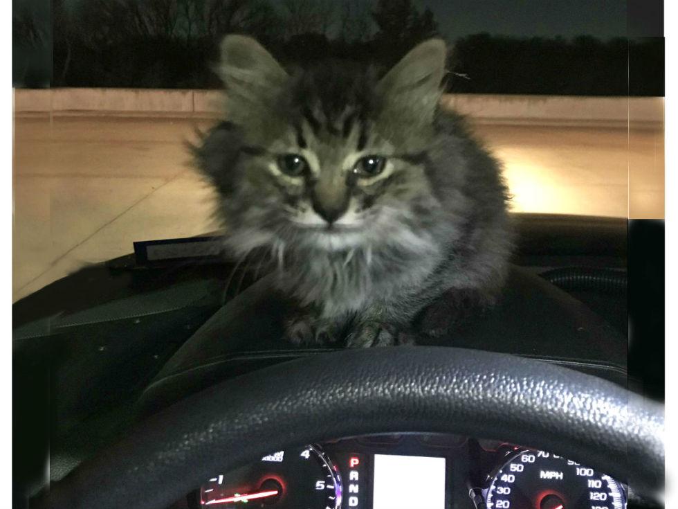 Grand Prairie kitten