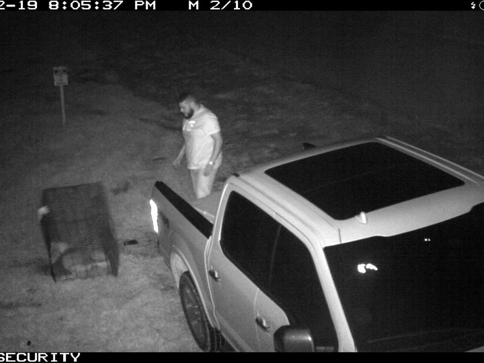 abandoned dog suspect