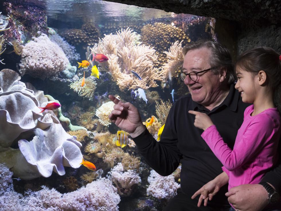 Sea Life coral tank
