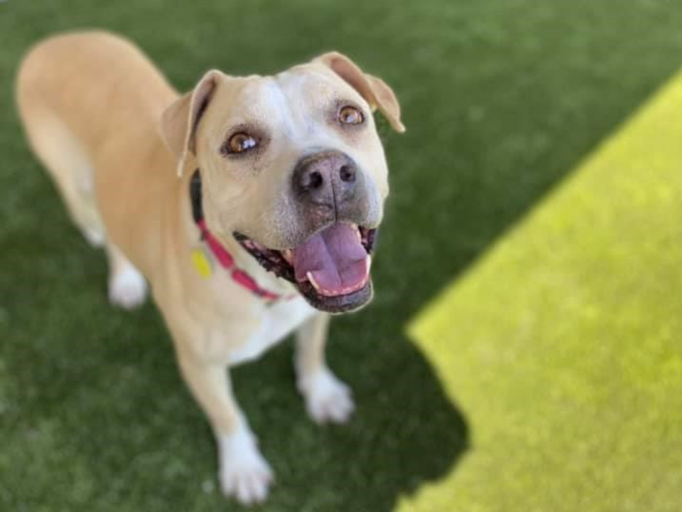 Fort Worth animal shelter dog