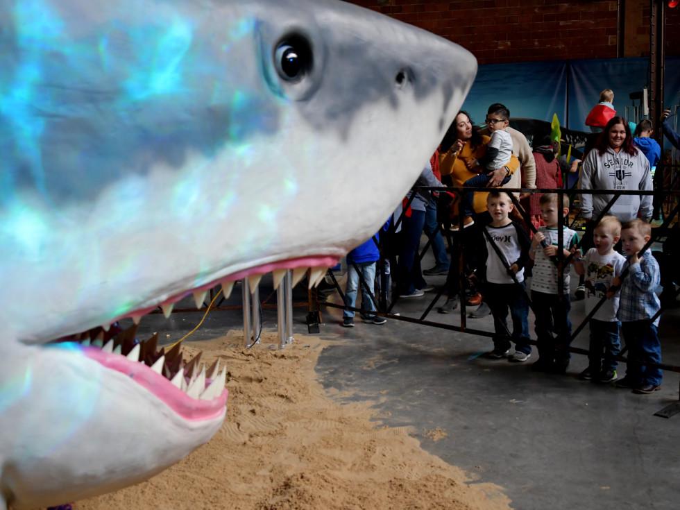 Jurassic Quest shark