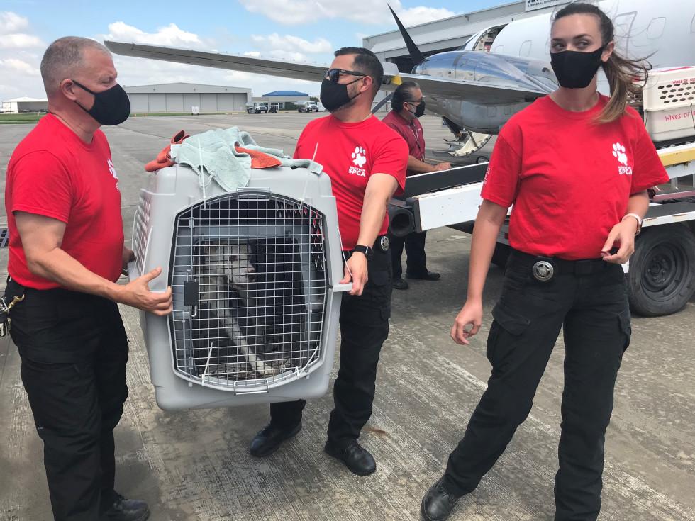 Houston SPCA animal rescue team