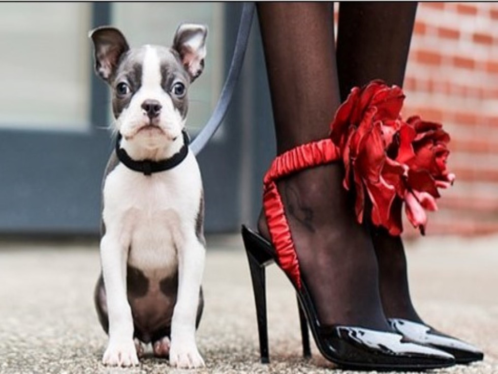 Dog and woman in heels