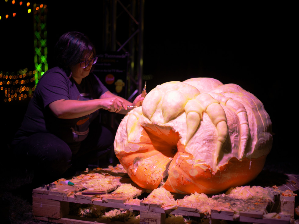 An artist carves a spider into a giant pumpkin.