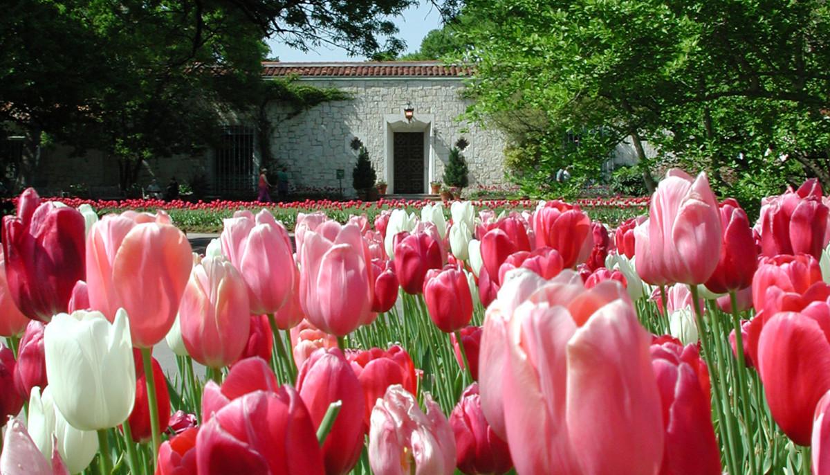 Dallas Arboretum And Botanical Garden Presents Dallas Blooms The