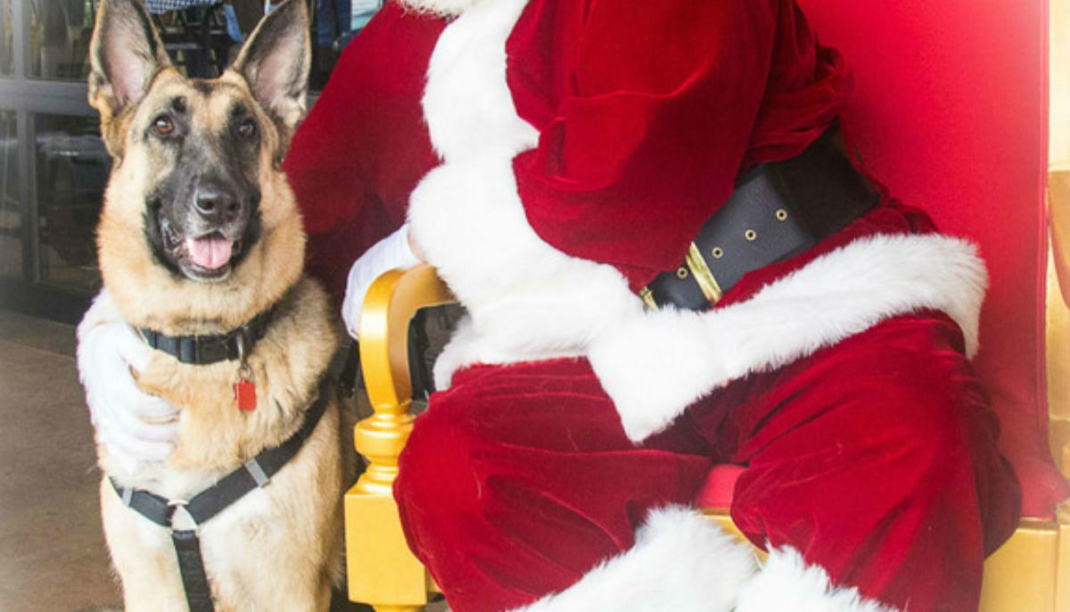 Greater Houston German Shepherd Dog Rescue presents Jingle