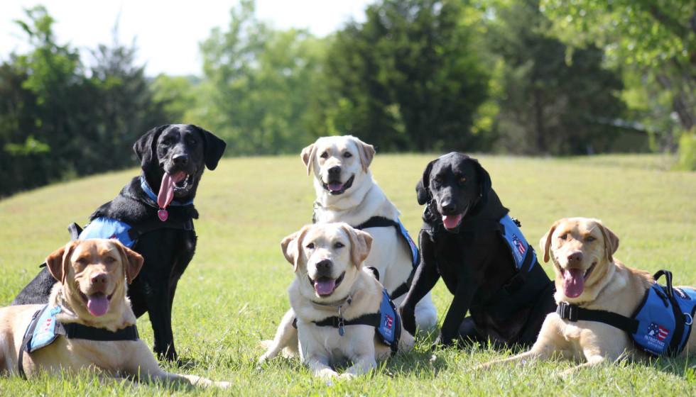 Hoffman Spotlights A Group That Unites Dogs With American Heroes Culturemap Houston הטמע סרגל חיפוש זה לאתר שלך. culturemap houston
