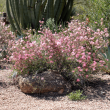 Houzz southwestern native shrubs plants gardening pink fairy duster