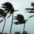 News_hurricane_palm trees_wind