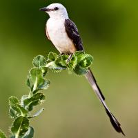 Trinity River Audubon Center presents Scissor-tails and Cocktails