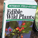 Events_Edible Wild Plant Tour_Feb 10