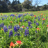 Stephanie Allmon Merry: Where to see beautiful bluebonnets in the Hill Country and around Texas this spring