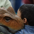 Brandon Watson: 'Real life' dinosaurs descend on downtown Austin for one dino-mite weekend